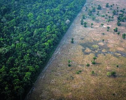 Taxa de desmatamento na Amazônia cresce 9,5% neste ano e já é a maior desde 2008