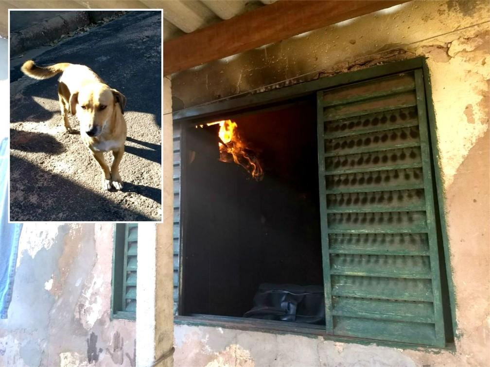 Chamas atingiram alguns cômodos do imóvel e cachorro (no detalhe) conseguiu alertar os vizinhos (Foto: João Trentini)