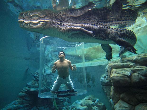 'Gaiola da Morte', experiência que permite que turistas nadem com crocodilos gigantes no parque Crocosaurus Cove, na Austrália (Foto: Divulgação/Crocosaurus Cove)