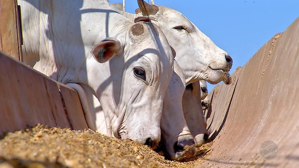 Brasil possui mais de 213 milhões de cabeças de gado — Foto: TV Centro América