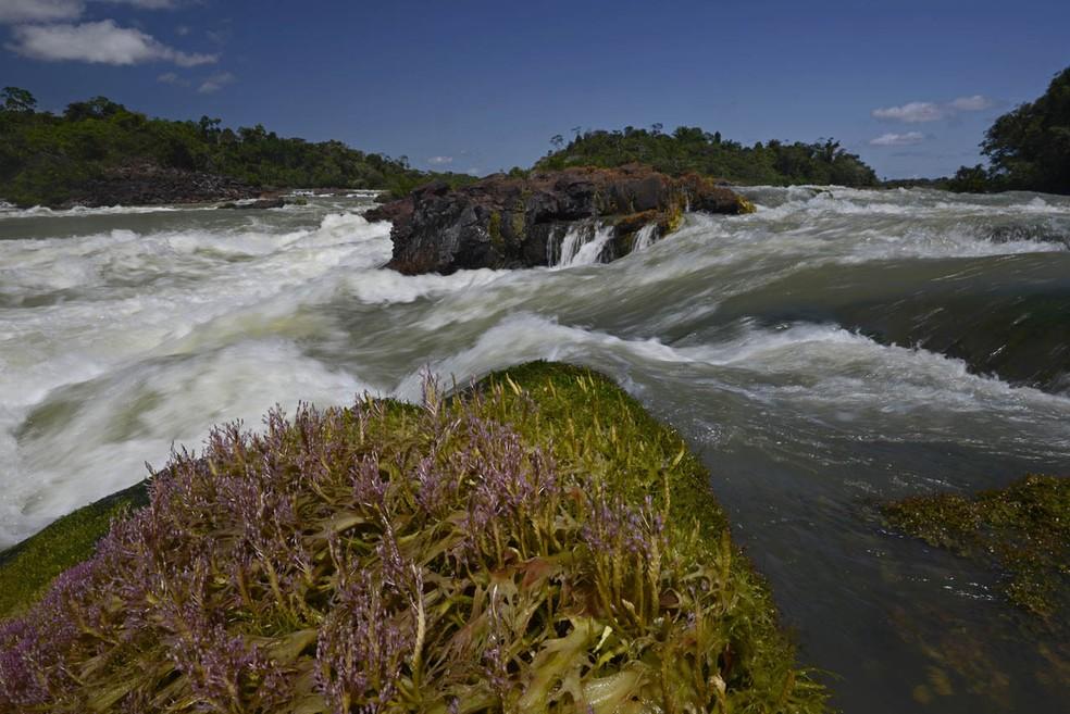 Rio Tapajós — Foto: Instituto Mamirauá