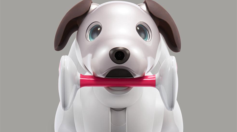 Aibo é o novo cachorro-robô da Sony que usa IA para aprender com o dono |  Robótica | TechTudo