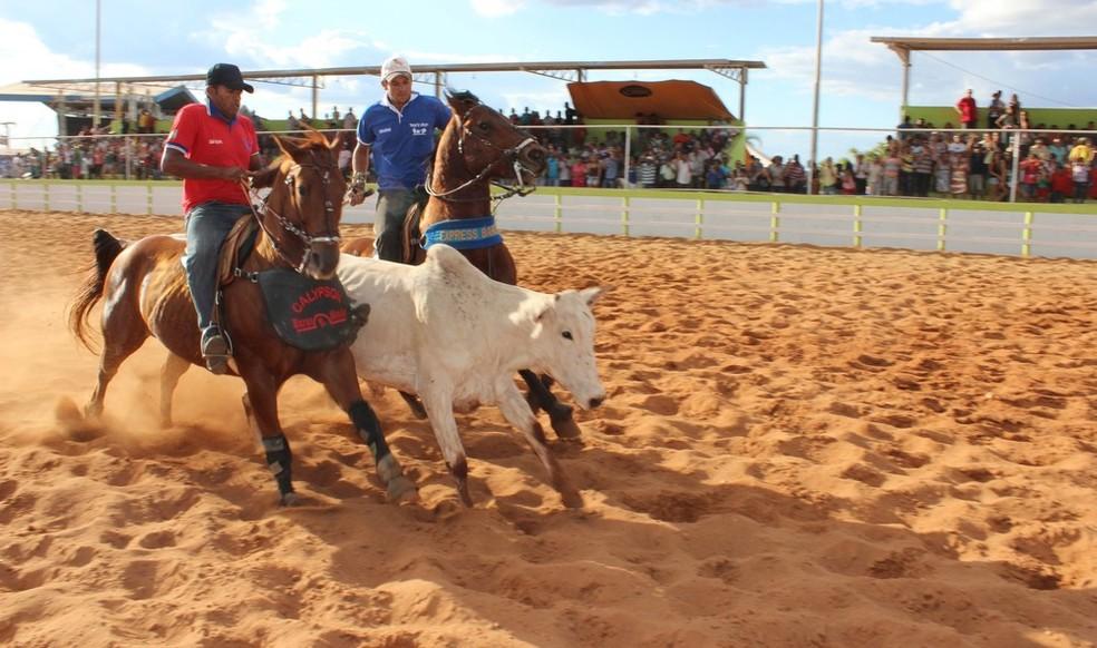 Lei sancionada estabelece regras para realização de vaquejadas no Ceará (Foto: Valdivan Veloso/Globoesporte.com)