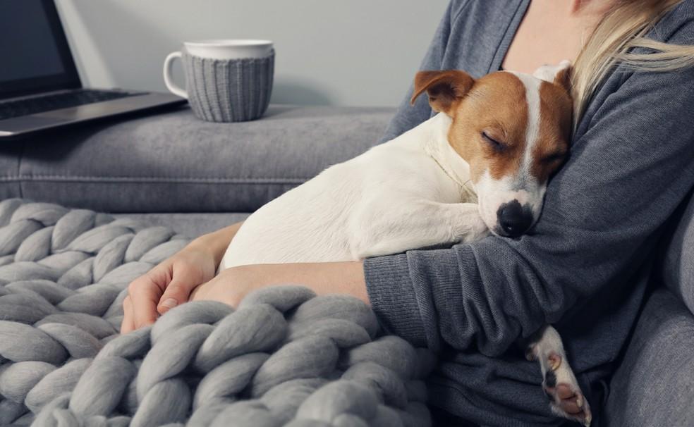 Um pet pode ser um ótimo companheiro do ser humano na vida — Foto: Divulgação