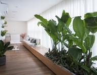 Jardim em casa: ideias para montar o seu e 15 espécies para plantar