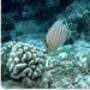 Proteção de Tela: Fishy Scenes