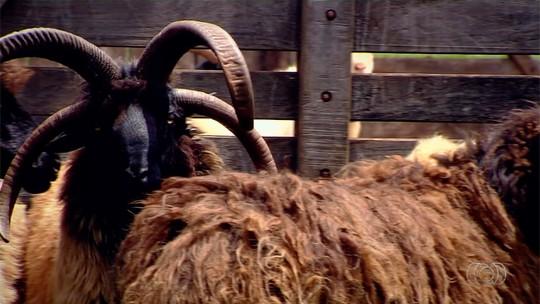 Família cria animais exóticos há três gerações, em Quirinópolis