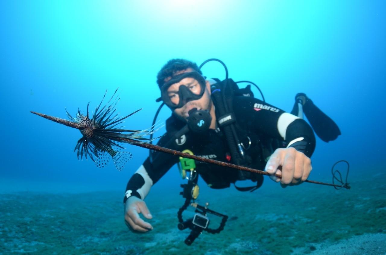 Peixe invasor venenoso é capturado  pela segunda vez e ecologistas alertam para risco em Noronha thumbnail