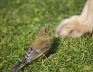 Como atrair pássaros para o jardim sem colocá-los em risco