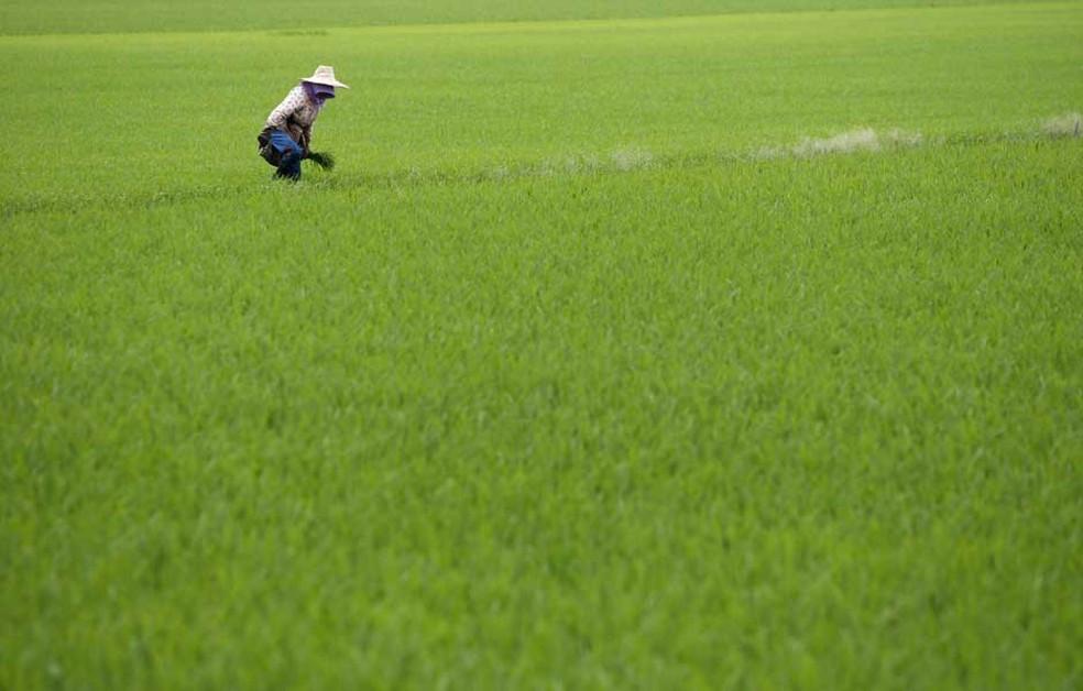 Na Índia, o aumento da vegetação é tributário principalmente da ampliação da agricultura; esta, no entanto, não contribui para a captura do carbono, como é o caso das florestas — Foto: Lai Seng Sin / AP Photo