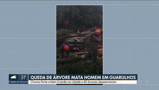 Motorista que morreu esmagado por árvore em Guarulhos parou para esperar chuva passar