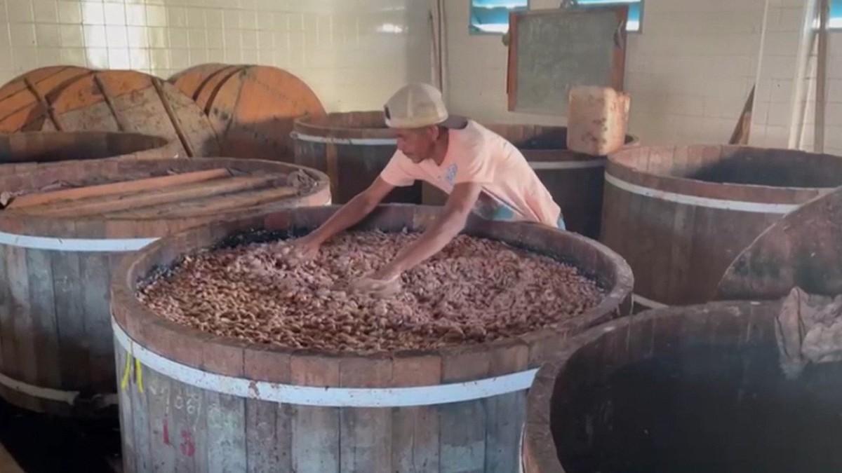 Cacau produzido na BA está entre os 50 melhores do mundo no Salão do Chocolate de Paris: 'Não dá para definir o Brasil em um sabor'