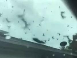 Nuvem de besouros surpreende em cidade da Flórida; vídeo (reprodução)