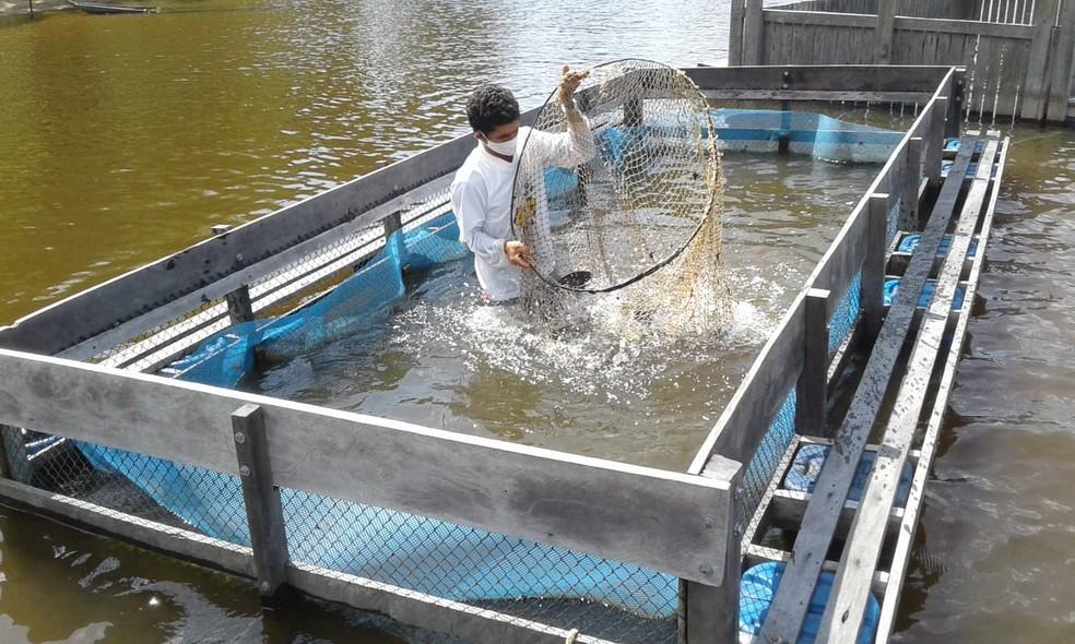Projeto de piscicultura na comunidade Jacururau, em Oriximiná — Foto: Ascom MRN/Divulgação