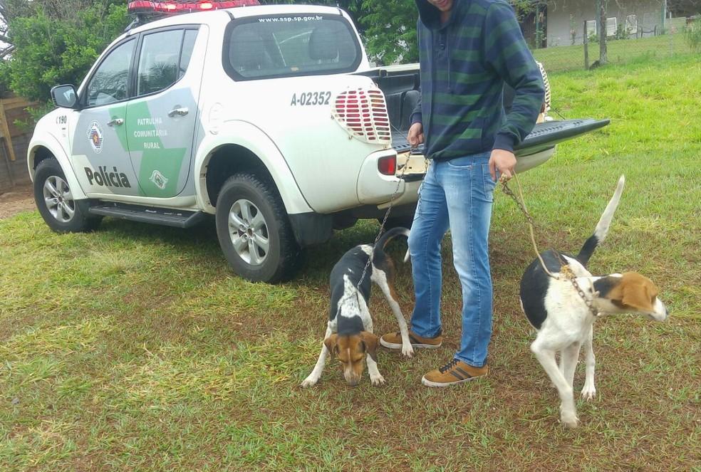 Animais foram destinados a um abrigo em Pirapozinho (Foto: Cedida/Polícia Militar Ambiental)