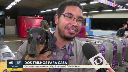 Cão encontrado nos trilhos do metrô no Rio ganha um lar