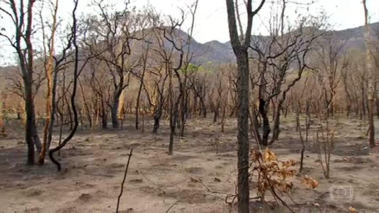 Com incêndio controlado, pesquisadores avaliam extensão dos danos no Pantanal