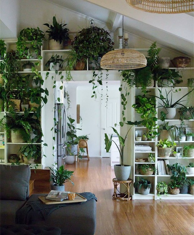 35 Indoor Garden Ideas To Green Your Home: 5 Dicas Para Cuidar De Plantas Dentro De Casa