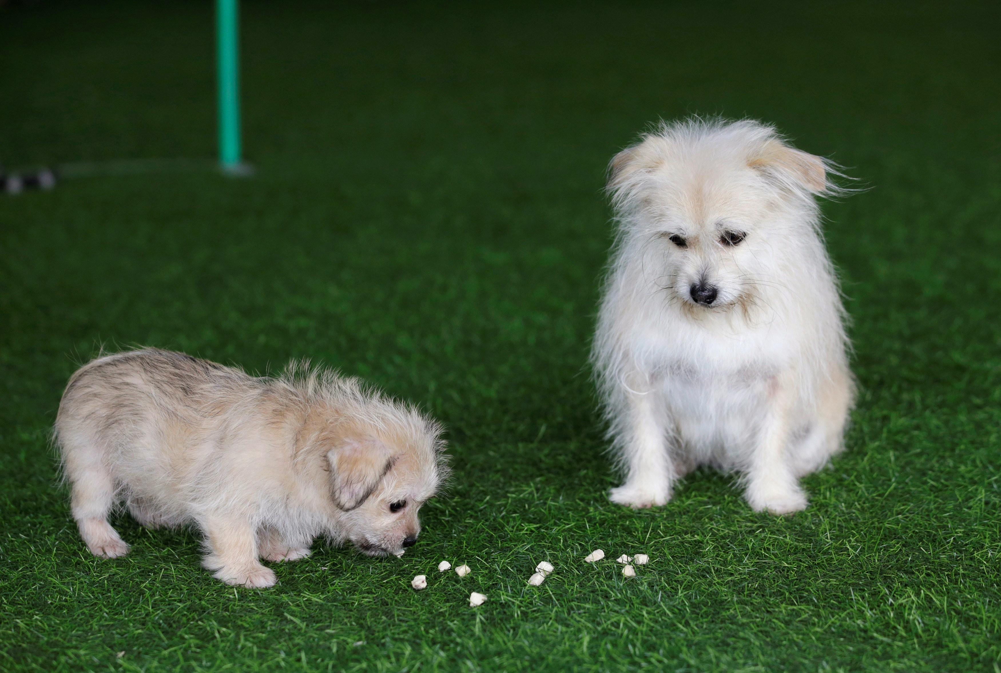 Cachorro famoso por aparecer em filmes e na TV da China é clonado