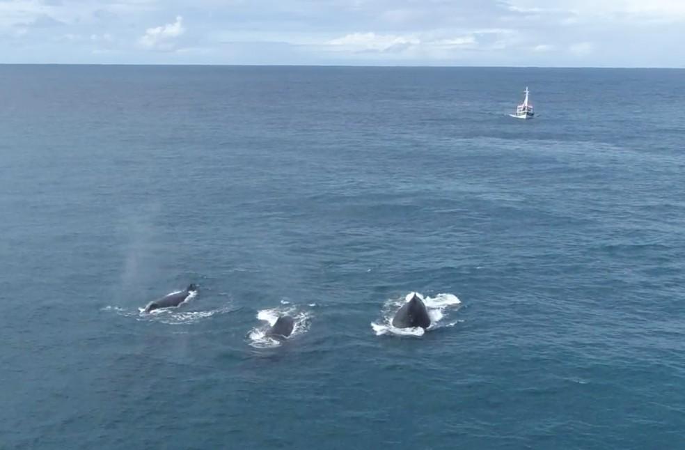 Baleias foram vistas durante expedição — Foto: Eduardo Melo/Projeto Baleia Jubarte