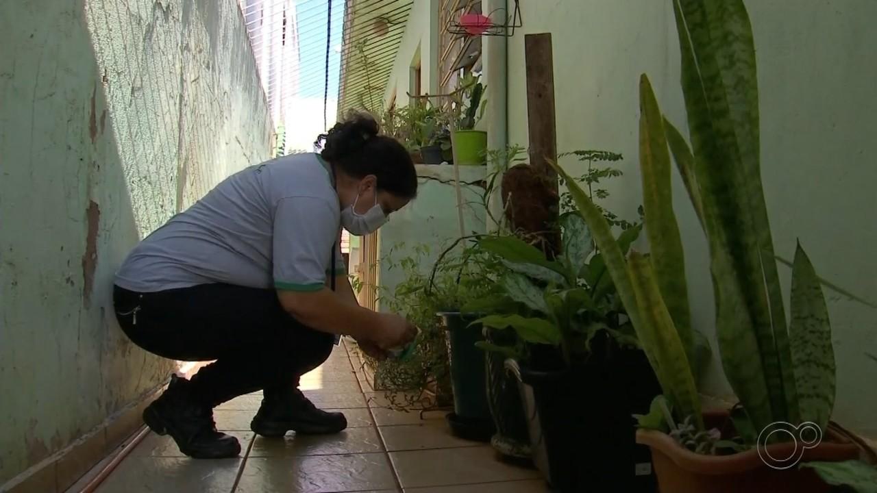 Prefeitura realiza mutirão de combate à dengue em Assis