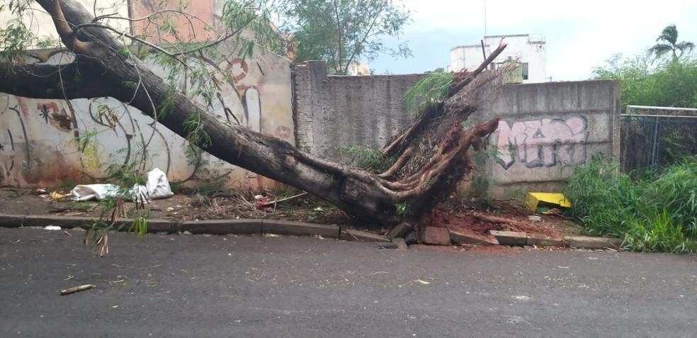 Ventania derrubou árvore pela raiz e galhos também atingiram a fiação da rede elétrica — Foto: Arquivo pessoal