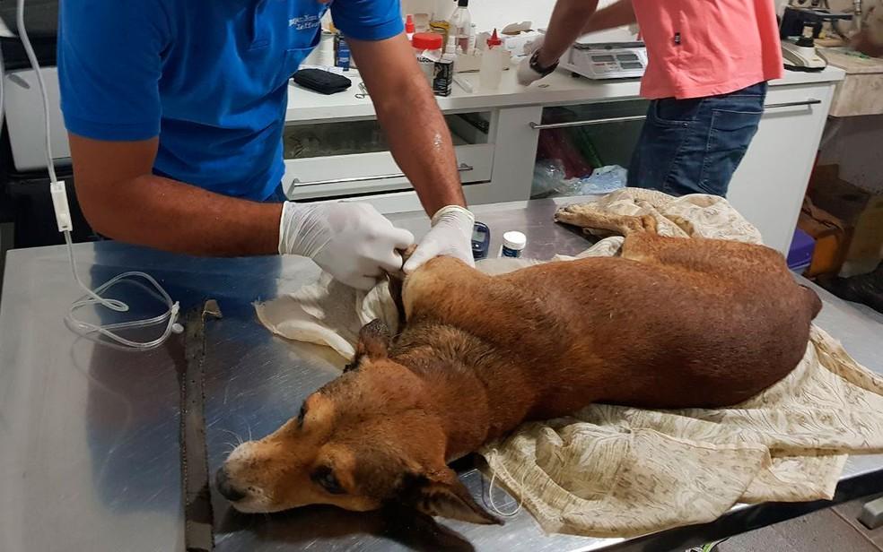 Cachorro foi resgatado pela polícia e levado para clínica veterinária na Bahia (Foto: Divulgação/Polícia Militar da Bahia)