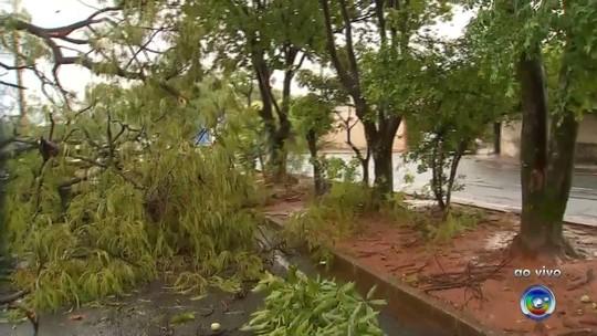 Tempestade causa estragos e derruba 20 árvores em Rio Preto