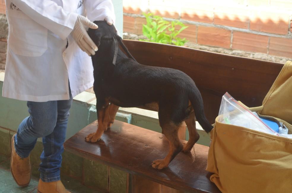 Equipes vão a campo para realizar testes de leishmaniose em cães (Foto: Magda Oliveira/ G1)