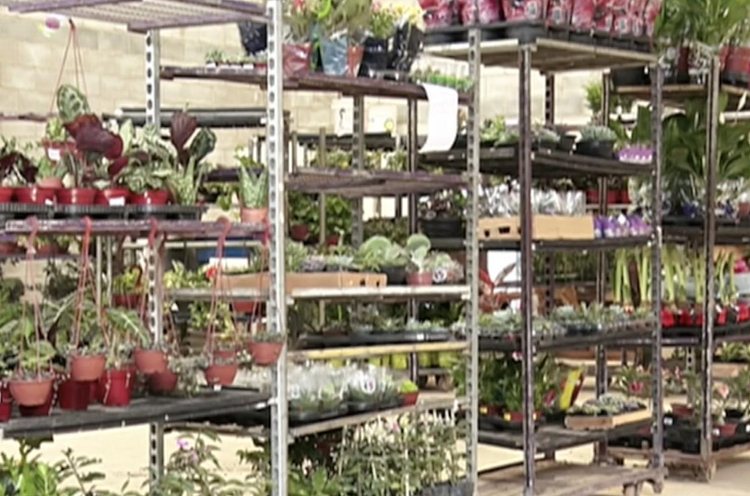Sem eventos, produtores de flores em Gravatá acumulam prejuízos que podem chegar até R$ 1 milhão