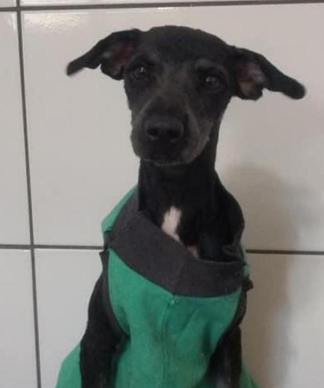 Fábio Bueno levou o cachorro para banho e tosa depois do resgate no lago municipal em Iacanga (SP) — Foto: Fábio Bueno/ Arquivo pessoal