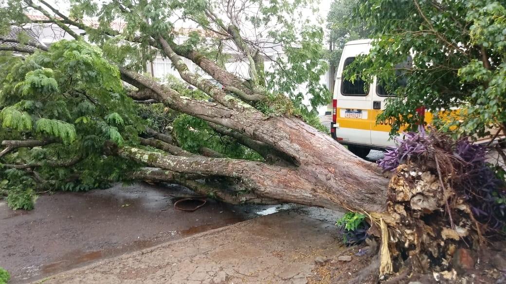Queda de árvores interditam ruas e atingem carros em Cascavel