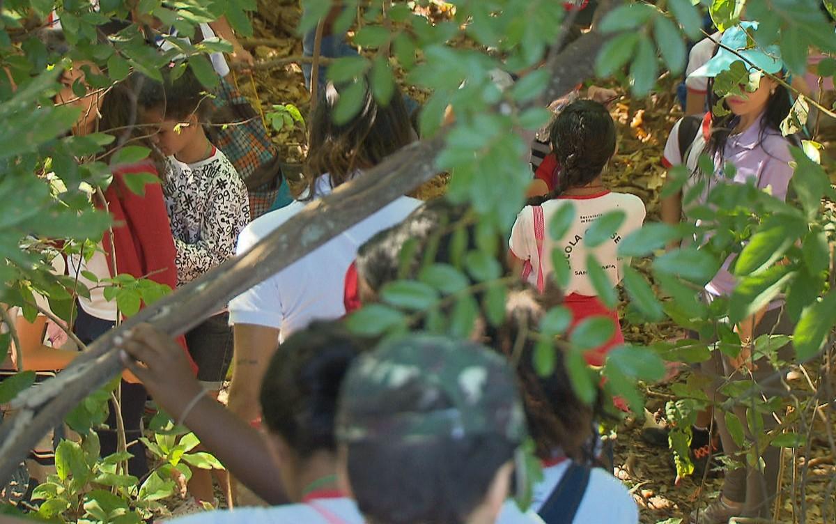 Escola pública do DF faz mutirão para revitalizar nascente em Santa Maria