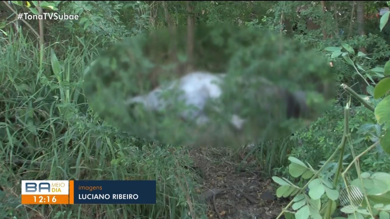 Cavalo morto é jogado em terreno baldio e odor incomoda moradores de Feira de Santana