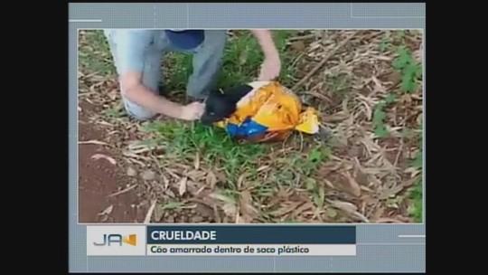 Cachorro é encontrado preso dentro de saco plástico em Abelardo Luz, no Oeste