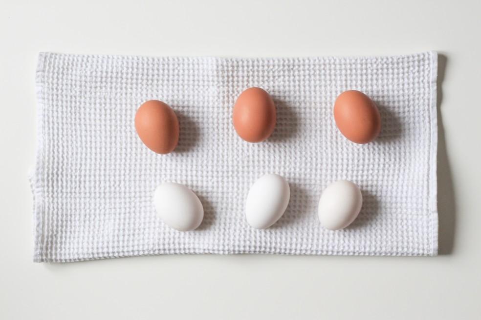 Cores das casca do ovo são definidas pela linhagem de cada galinha. — Foto: Unplash
