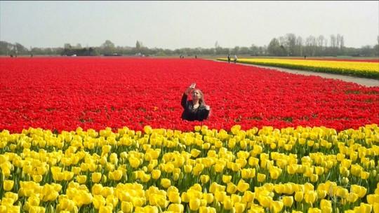 Produtores de tulipa declaram guerra contra as selfies na Holanda
