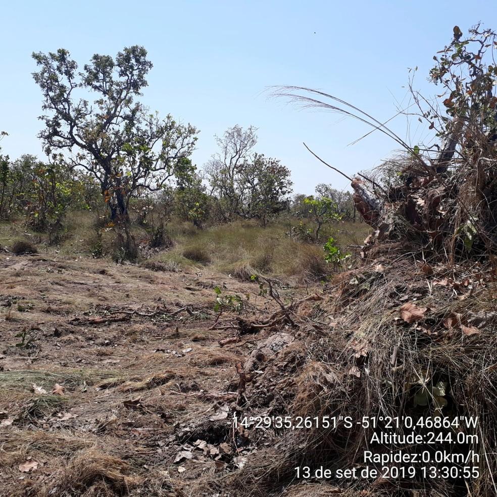 Foto mostra desmatamento ilegal encontrado pelo Ibama em Mato Grosso — Foto: Ibama/Divulgação
