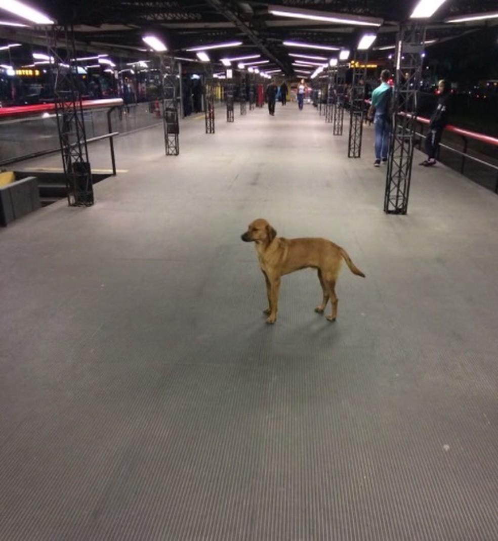 Depois de 3 km de trajeto, o cachorro desceu no terminal do Cabral — Foto: Arquivo pessoal/Diego Gutierre