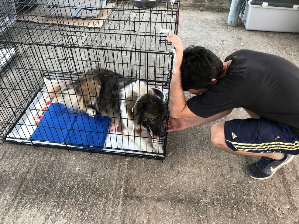 Voluntário em abrigo para animais em Atenas, em 12 de agosto de 2021 — Foto: AFP