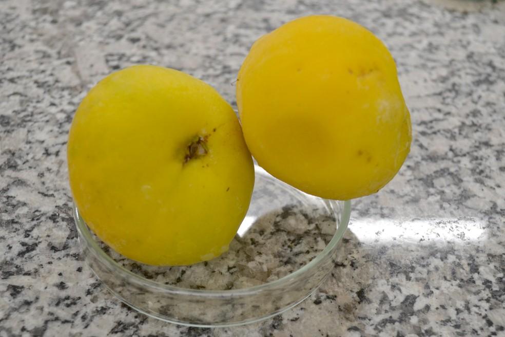 Araçá-boi: frutas tem seu bioma ameaçado atualmente, diz pesquisador (Foto: Rodrigo Pereira/ G1 Piracicaba)